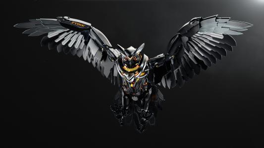 猫头鹰,猫头鹰,华硕,高清,4K