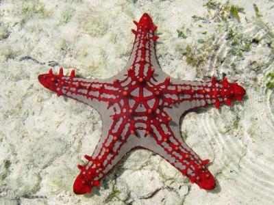海星,桑给巴尔,非洲,潜水,旅游,水下,鱼,星鱼,海洋生物,世界上最好的潜水点(水平)