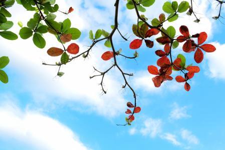 枝桠上的树叶