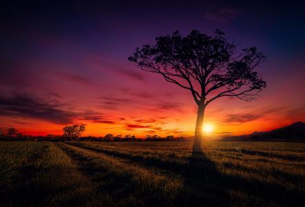 日落,树,5K