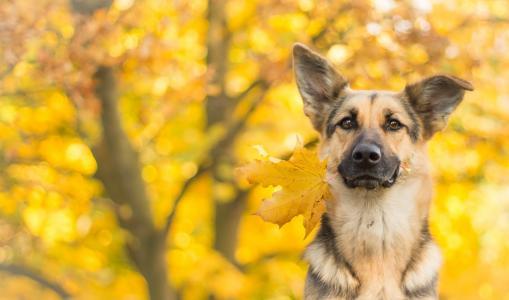 狗,可爱的动物,叶子,秋天,4k(水平)