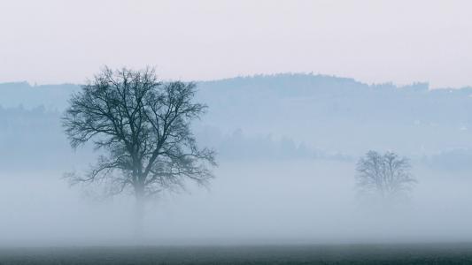 朦胧迷人的大雾风光