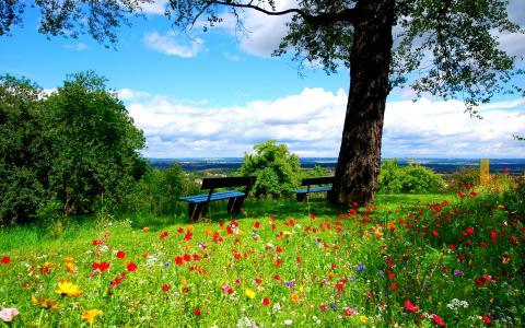 花,景观,板凳,树,绿色,高清
