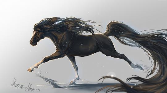 马,蹄,5k,4k壁纸,鬃毛,舞动,黑色,白色背景,艺术,(水平)
