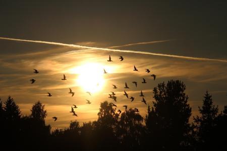 夕阳西下唯美意境风光