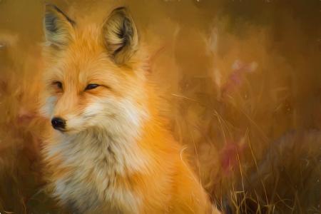 狐狸,图稿,油漆,高清,5K