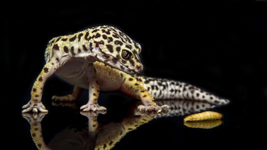 壁虎,爬行动物,蜥蜴,毛毛虫,特写,绿色,眼睛,动物(水平)