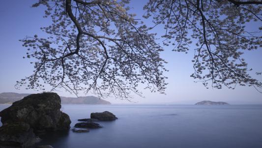 海,5k,4k壁纸,8k,海洋,岩石,树(水平)