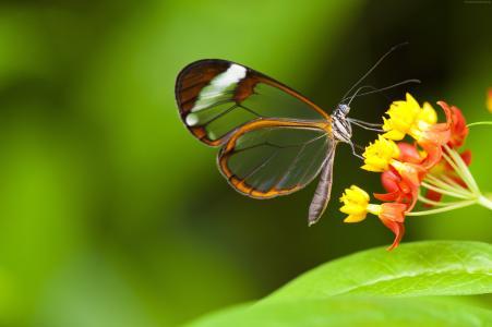 蝴蝶,5k,4k壁纸,昆虫,鲜花,绿色,玻璃,自然,花园(水平)