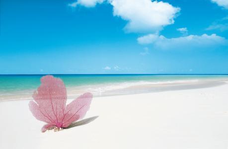 普拉亚帕拉伊索,拉戈岛,古巴,2016年最佳海滩,2016年旅行者选择奖(水平)