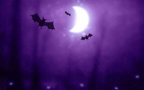 万圣节蝙蝠,月亮,紫色,高清