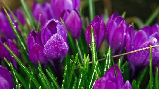 紫色奇怪的花