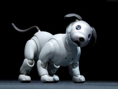 索尼爱宝,机器人,狗,HD(水平)