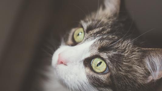 小猫乖巧呆萌可爱写真