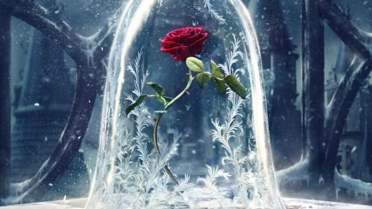 美女与野兽,2017电影,迪斯尼,玫瑰