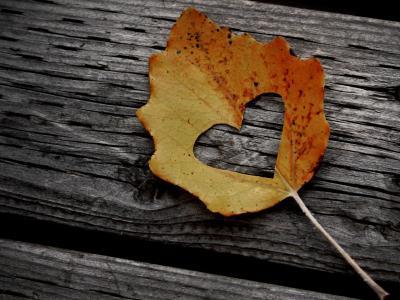 刻下爱心的叶子