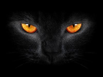 黑猫,可怕,黄色的眼睛,黑暗的背景