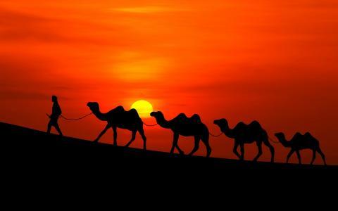 阿拉伯日落骆驼