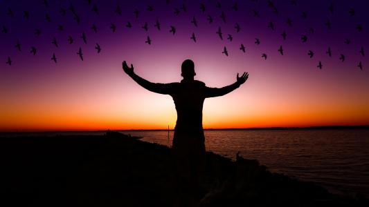 令人兴奋的,愉快的心情,鸟,日落,剪影