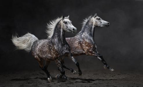 马,棕色,驰骋(水平)