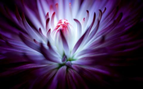 紫色花4K