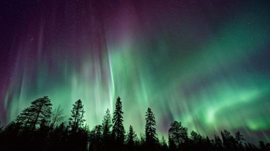北极光,森林,北极光,4K,8K