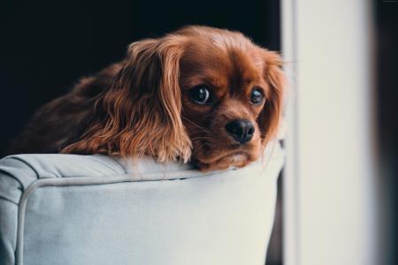 小狗,可爱的动物,5k(水平)