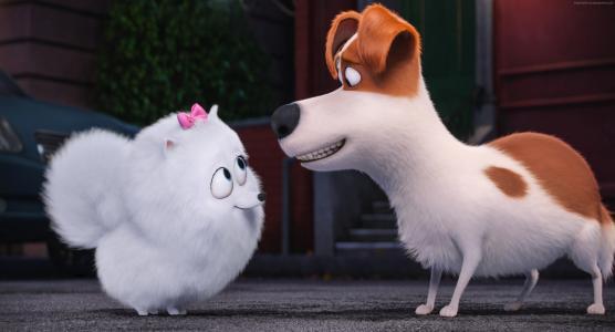 宠物的秘密生活,狗,2016年最佳动画电影,卡通(水平)