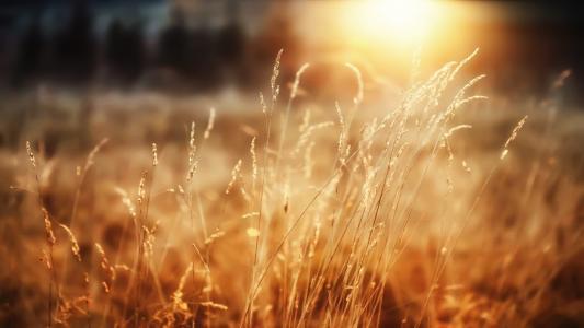 早晨的阳光
