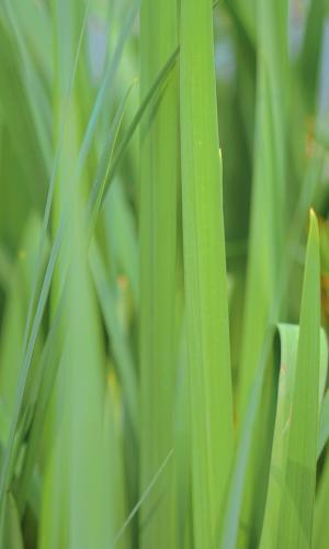 养眼小清新绿植