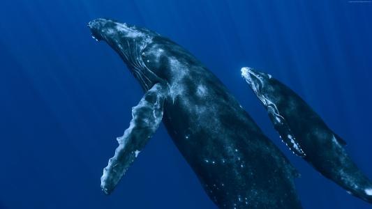 鲸鱼,水下,最佳潜水点(水平)