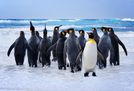 企鹅,雪,海洋,可爱的动物,搞笑(横向)