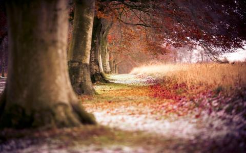 山毛榉秋天的树木