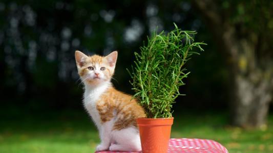 乖巧软萌橘色小奶猫