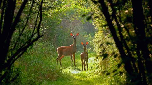 小鹿们在森林阳光下唯美写真