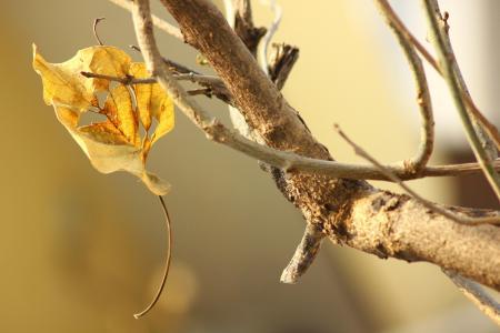 枝桠上的枯叶