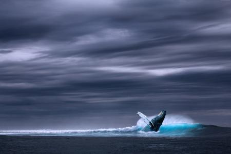 鲸鱼,海洋,天空,5K(水平)