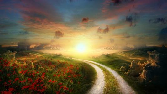 太阳罂粟路径景观
