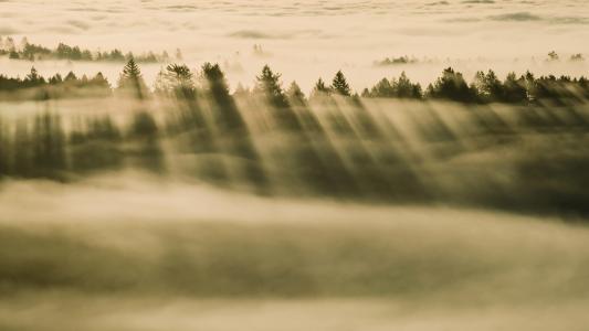 森林,起雾,薄雾,云,高清,5K