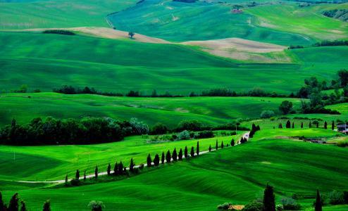 托斯卡纳,4k,高清壁纸,意大利,草地,丘陵,松树,树木(水平)