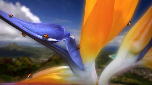 奇怪的品种花