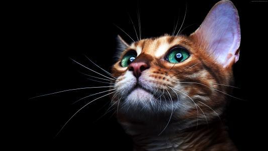 小猫,小猫,猫,眼睛,可爱(水平)