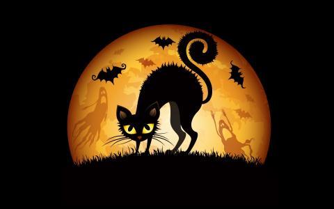 万圣节猫蝙蝠