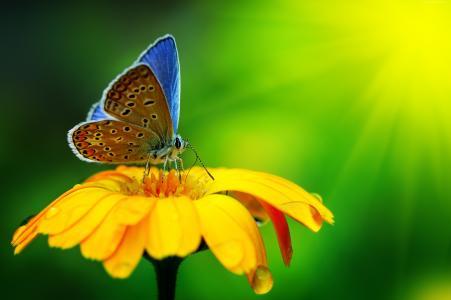 蝴蝶,昆虫,鲜花,玻璃,性质,花园(水平)