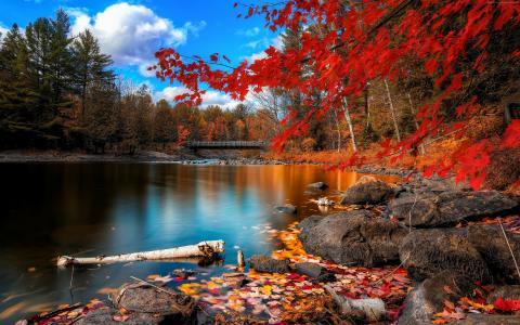 秋季森林,4k,高清壁纸,树叶,树,湖,岩石,海滩,桥,天空,云(水平)