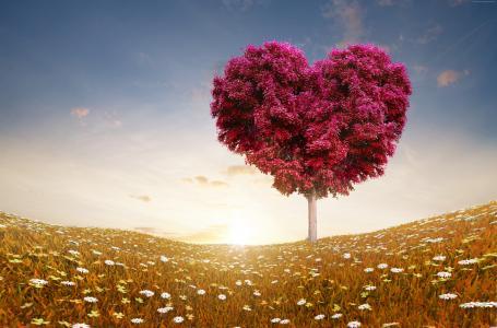 草地,5k,4k壁纸,8k,树,爱,太阳(水平)