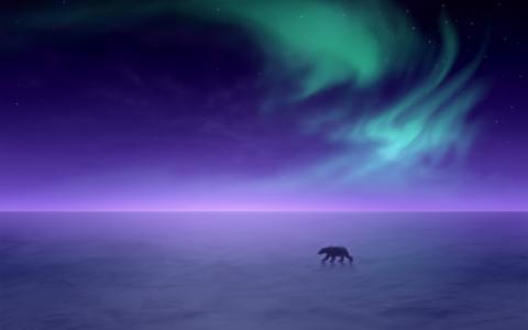 北极熊,北极光,北极光,高清
