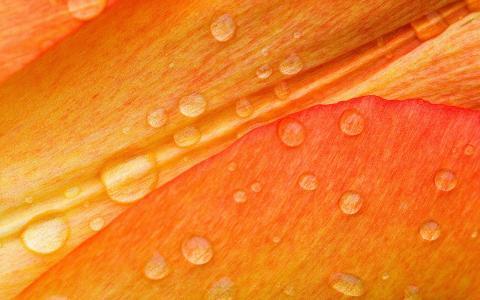 滴在花瓣上