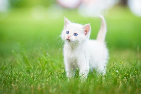 小猫,可爱的动物,草,5k(水平)