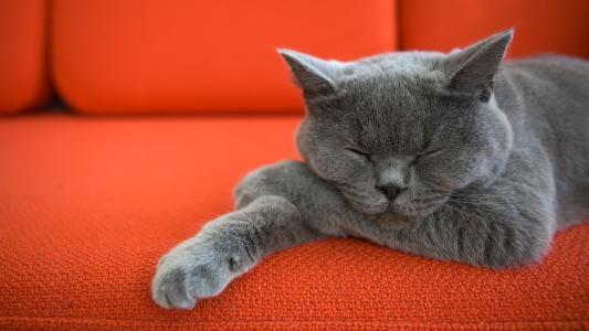 猫,宠物,沙发,高清